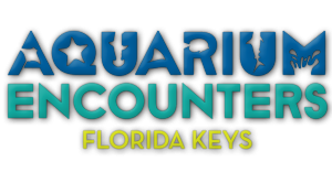 Aquarium Encounters Florida Keys